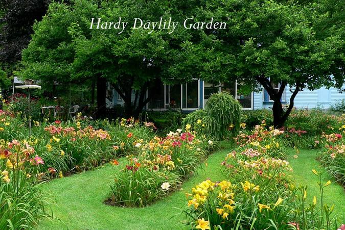 Hardy Daylily Garden Front Garden