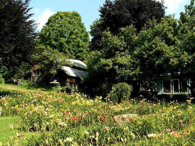 Hardy Daylily Garden View