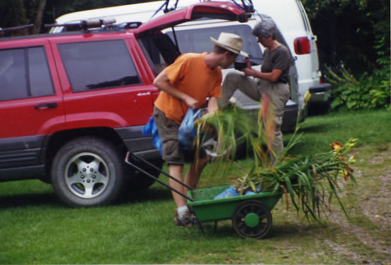 Hardy Daylily Garden Digger Packing Plants for Customer